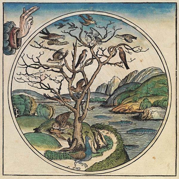 『뉘른베르크 연대기』의 천지창조 네번째 날의 묘사 일러스트.